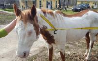 486 Loose Horses
