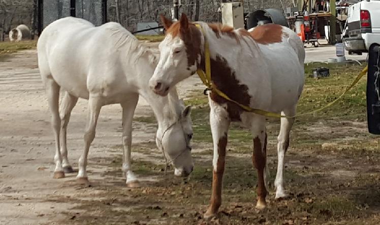 Loose Horse 4