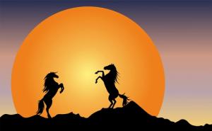 486 horses at night